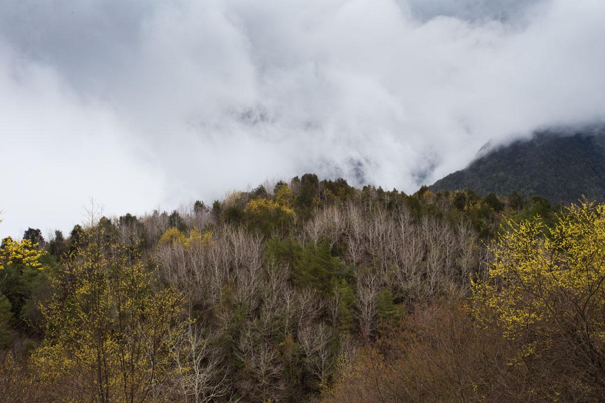 雾气缭绕 云雾被加速了