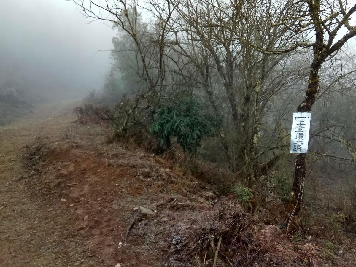 上金顶大路,剩下的就是在迷雾中走来走去了,雾气遮住了所有的风景。