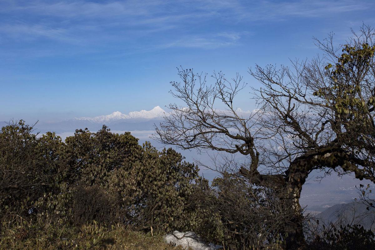 老树与贡嘎山